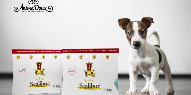 [Medicamentos] A coleira Scalibor protege o seu cão