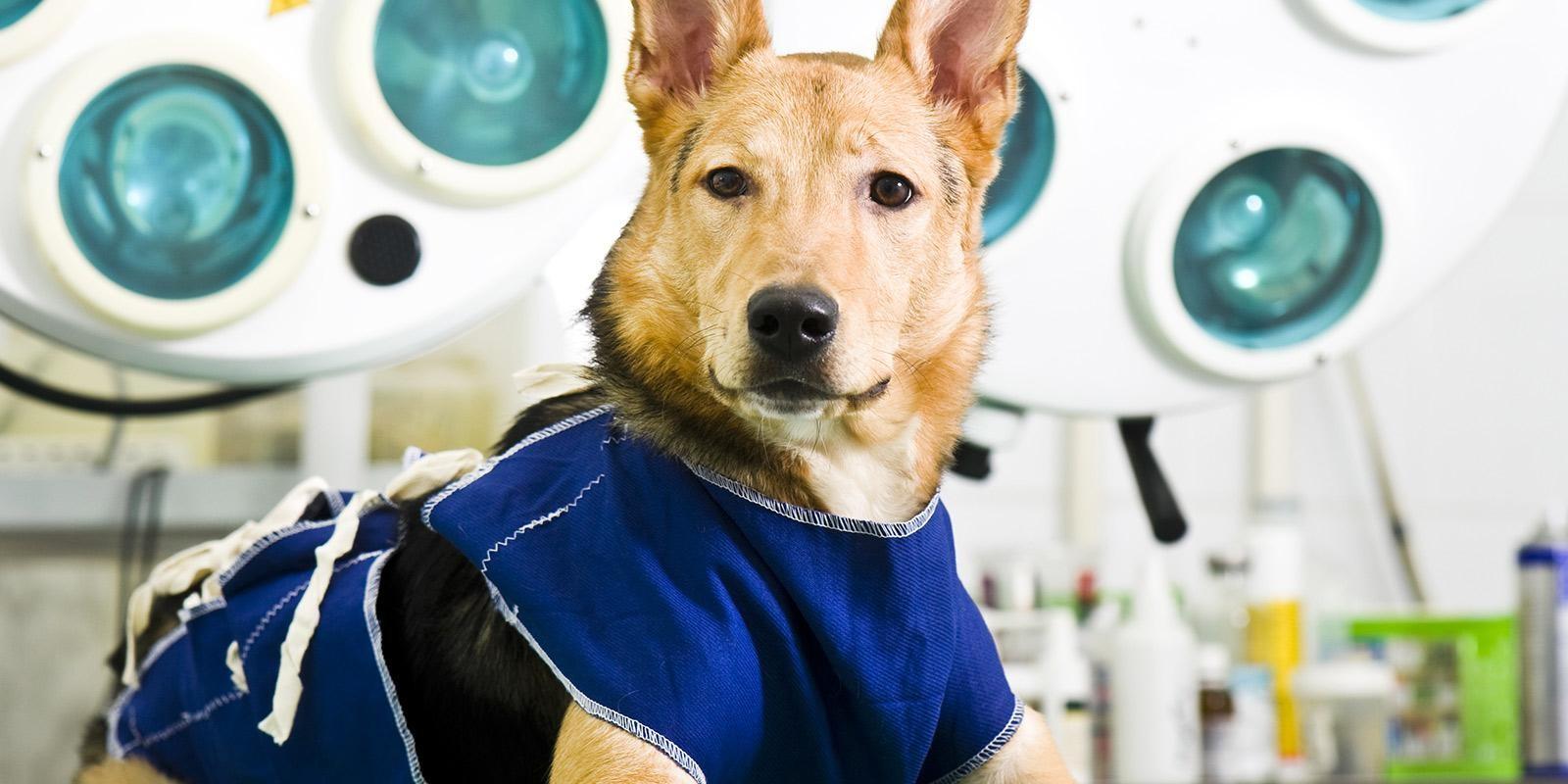 [Cirurgia Geral] O que há de melhor para o seu pet