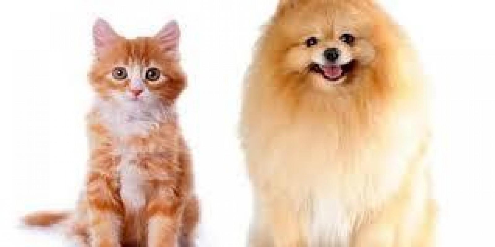 Dicas para Evitar Carrapato no Seu Pet